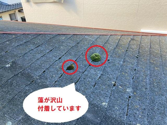 藻がスレート屋根に付着しています