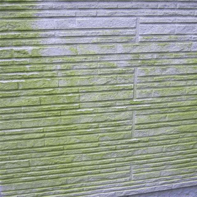 外壁の苔は塗装が必要